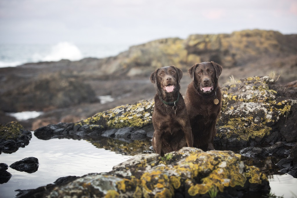 Dog photographer Kiama NSW
