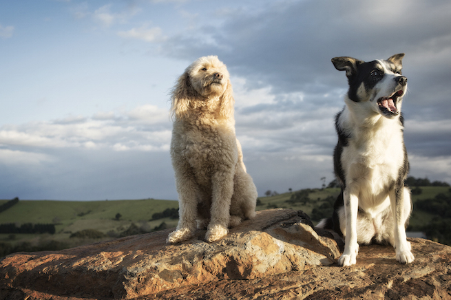 Dog photographer South Coast NSW
