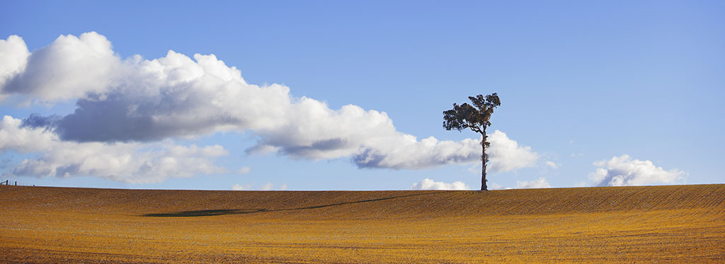 Country Landscape Photography