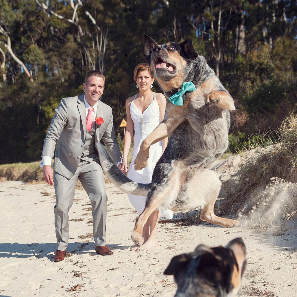 South Coast Wedding Photography