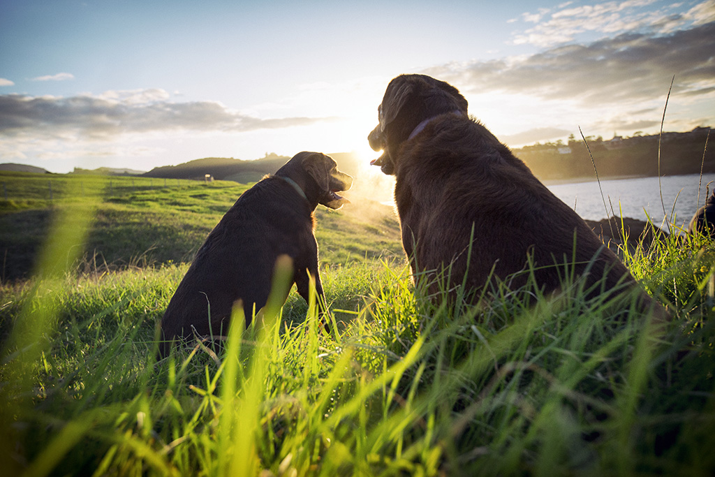 South Coast Dog Photographer