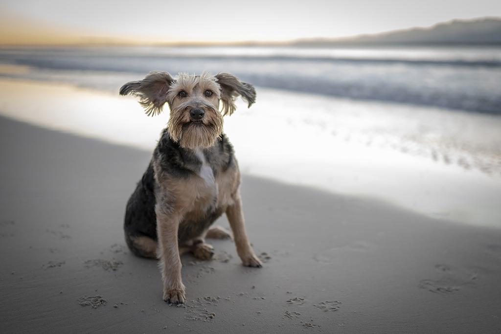 South Coast Pet Photography_