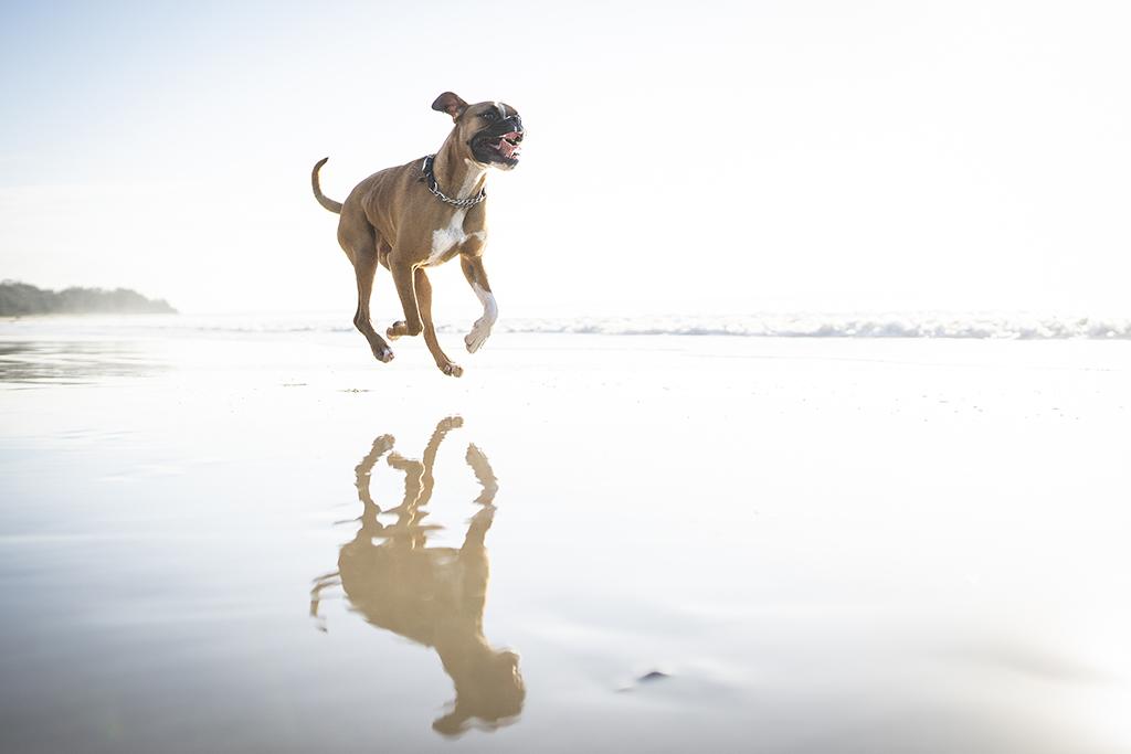 South Coast Pet Photography